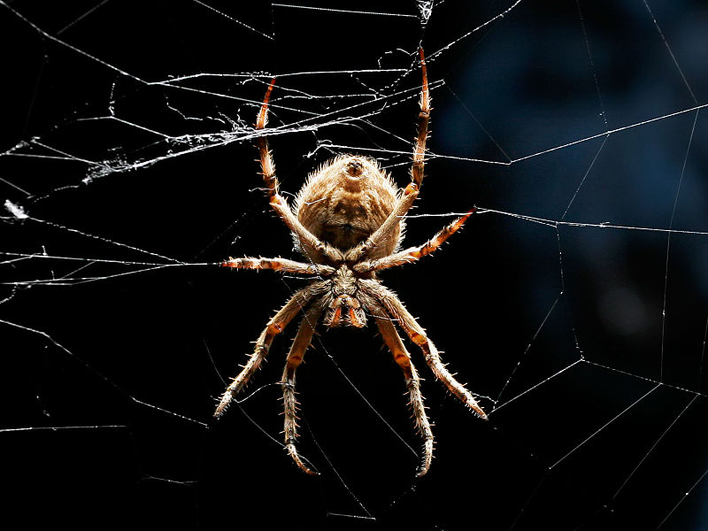 The Spider in Celtic Myth